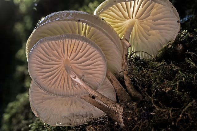 dřevní houby